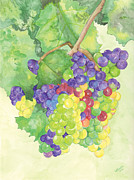 Catherine Basten - Grape Vine