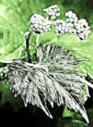 Grape Leaf Digital Art Prints - Grape vine leaf Print by Odon Czintos