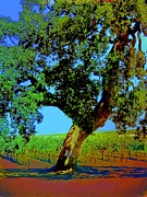 Winery Digital Art - Grape Vines Under the Oak Tree by Cindy Edwards
