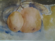 Grapefruit Paintings - Grapefruit on a tree by Tom Steiner