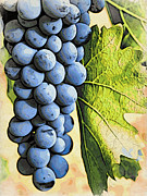 Blue Grapes Photos - Grapes 2 by Jacklyn Duryea Fraizer