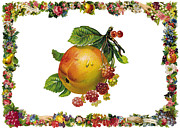 Cards Vintage Digital Art Prints - Grapes and Apple Print by Munir Alawi
