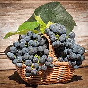 Concord Grapes Metal Prints - Grapes And Leaves In Basket Metal Print by Len Romanick