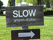 Wines Photo Originals - Grapes at Play by Leslie Reitman
