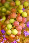 Ripened Fruit Prints - Grapes background Print by Michal Bednarek
