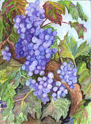 Grape Leaves Drawings Posters - Grapes For The Harvest Poster by Carol Wisniewski