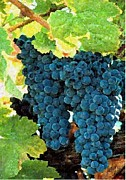 Vine Pastels - Grapes Fruit On The Vine by Olde Time  Mercantile