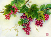 Grapes Art Originals - Grapes by Hailey E Herrera