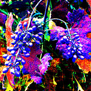 Grape Vineyard Originals - Grapes II by Jerome Stumphauzer