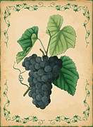 Grape Leaf Framed Prints - Grapes Illustration Framed Print by Indian Summer