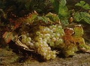 Fruit Basket Prints - Grapes In A Basket Print by Geraldine Bakhuyzen