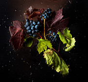 Syrah Photo Metal Prints - Grapes Metal Print by Ivan Vukelic
