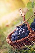 Mythja  Photography - Grapes