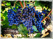 Blue Grapes Photographs Prints - Grapes Of Art 1 Print by Roxy Hurtubise