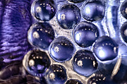 Handblown Glass Art Glass Art - Grapes of Glass by Omaste Witkowski