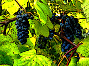 Winery Photography Digital Art Prints - Grapes on the Vine Print by Patricia Erwin