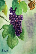 Vine Leaves Pastels Posters - Grapes on the vine Poster by Prashant Shah