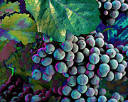 Peter Piatt Posters - Grapes Painterly Poster by Peter Piatt