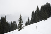 Conifer Tree Prints - Graphical winter picture with trees and snow Print by Matthias Hauser