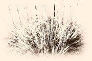 Board Fence Prints - Grass Print by Barbara Henry