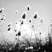 Tim Hester Prints - Grass Field Black and White Print by Tim Hester