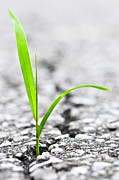 Growing Photo Posters - Grass growing from crack in asphalt Poster by Elena Elisseeva