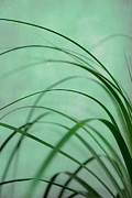 Hannes Cmarits Metal Prints - Grass Impression Metal Print by Hannes Cmarits