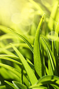 Mythja Prints - Grass macro Print by Mythja  Photography
