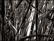 Colleen Cannon - Grasses 2
