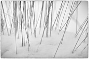 Snow Picture Prints - Grasses in the Snow Print by Natalie Kinnear