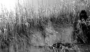 Patrizia Henderson - Grasses on the Water