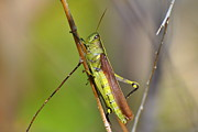 Blending Photos - Grasshopper by Jodi Terracina