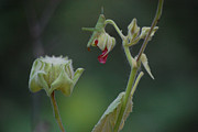 Rderder Photos - Grasshopper on Bud by Roy Erickson