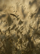Light And Dark  Photo Prints - Grassland Print by Robert Ball