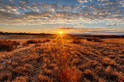 Grassland Framed Prints - Grassland Sunset Framed Print by Peter Tellone