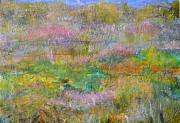 Regina Valluzzi - Grasslands