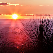 Sunflare Framed Prints - GrassTree Sunset Framed Print by Peta Thames