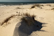 Sandy Beaches Prints - Grassy Dunes Print by Adam Jewell