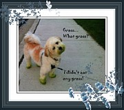 I Eat Framed Prints - Grassy Puppy Framed Print by Barbara Griffin