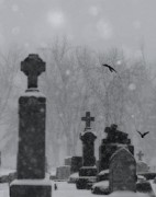 Winter Crows Framed Prints - Graveyard Snow Framed Print by Gothicolors And Crows