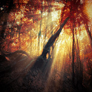 Ildiko Neer - Gravity of Light