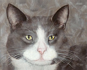 Amy Reges - Gray and White Tuxedo Cat