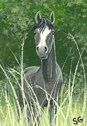 Sherry Goeben - Gray Mare -- Let