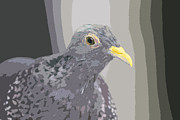 Bob and Jan Shriner - Gray Pigeon