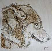 Gray Pyrography Framed Prints - Gray Wolf Pyrographic Wood Burn Original 5.75 x 5.75 inch Art Panel Framed Print by Shannon Ivins