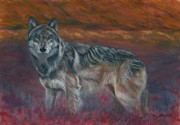 Colors Of Autumn Painting Posters - Gray Wolf Poster by Tom Blodgett Jr