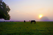 Grazing Horse Digital Art Posters - Grazing at Sunrise Poster by Bill Cannon