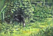 Holy Cow Paintings - Grazing Cow by Usha Shantharam