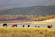 Grazing Art - Grazing by Diana Kraleva