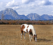 Autumn In The Country Prints - Grazing in the Grandeur  Print by Kara Kincade